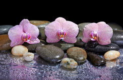 Pebbles and pink orchids Royalty Free Stock Photo