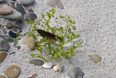 Pebbles and plant on beach Stock Photos