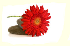 Pebbles and red flower Royalty Free Stock Images