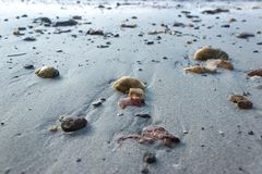 Pebbles on a sand beach in morning.  Stock Images
