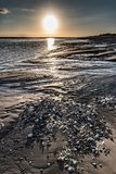 Pebbles and seashells on the beach at low tide at sunrise. Sunrise over the mud and a pile of small pebbles from the Bay of Somme at low tide Royalty Free Stock Images