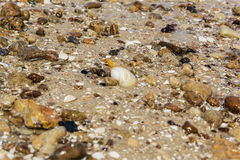 Pebbles and seashells on the sand Royalty Free Stock Photo