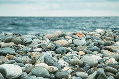 Pebbles on the seashore. Pebbles on the beach on the sea shore Stock Photography