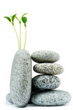 Pebbles and seedlings. Alternative medicine concept Royalty Free Stock Photos