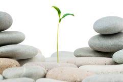 Pebbles and seedlings. Alternative medicine concept Stock Photos