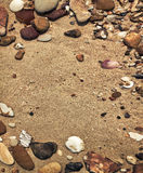 Pebbles and shells Royalty Free Stock Photography