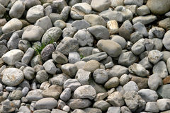 Pebbles and stones. Grey pebbles and stones with some grass Royalty Free Stock Photos