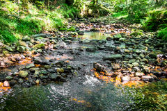 Pebbles and stream through a forest Stock Photos