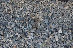A pebbles texture. This picture shows a simple pebbles texture with small blades royalty free stock images