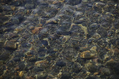 Pebbles under water. Pebbles brown and black color under the sea water, the incoming wave from above Stock Photography
