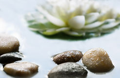 Pebbles in the water. Pebbles on the water surface Stock Image