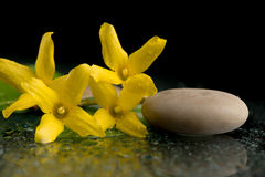 Pebbles and yellow flower on black with water drops Royalty Free Stock Image