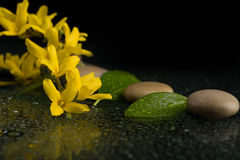 Pebbles and yellow flower on black with water drops Royalty Free Stock Images