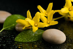 Pebbles and yellow flower on black with water drops Stock Photo