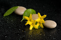 Pebbles and yellow flower on black with water drops Stock Image