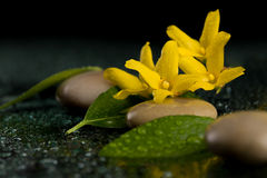 Pebbles and yellow flower on black with water drops Stock Photography