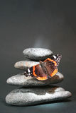 pebblesand бабочки Стоковые Изображения RF
