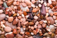 pebblespink Arkivbilder