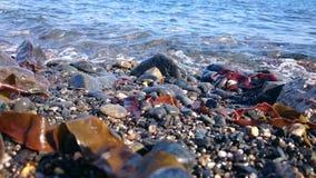 Pebbly пляж, Корнуолл стоковая фотография
