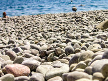 The pebbly beach of the Black Sea Stock Photography
