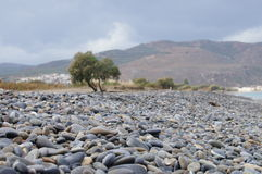 Pebbly Beach in Crete. A pebbly Beach in Crete with a tree and Mountain background Royalty Free Stock Photos