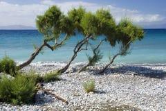 Free Pebbly Beach, Ialyssos, Greece Royalty Free Stock Image - 196474546