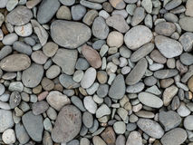 Pebbly seashore background Stock Image