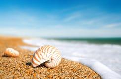 在peblle海滩和海的舡鱼壳挥动 免版税库存图片