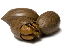 Pecan Royalty Free Stock Photo