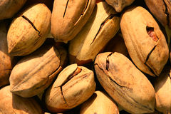 Pecan Stock Images
