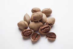 Pecan. On a white background Stock Photography