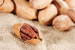 Pecan Stock Photography
