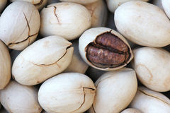 Pecan Royalty Free Stock Photos
