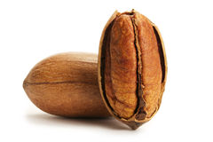 Pecan and a half Royalty Free Stock Images