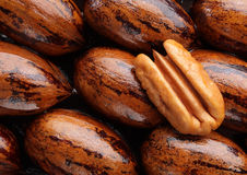 Pecan halve Royalty Free Stock Images