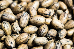 Pecan Harvest. This is a pail of pecans Royalty Free Stock Images