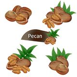 Pecan nasiono w nutshell z liśćmi ustawiającymi Zdjęcia Stock