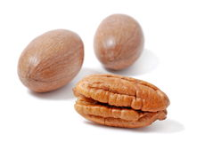 Pecan nut Stock Image