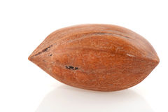 Pecan nut. One pecan nut in macro isolated over white Stock Photography