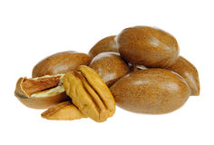 Pecan nut Royalty Free Stock Images