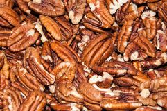 Pecan nut or Carya illinoinensis Royalty Free Stock Photo