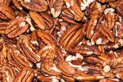 Pecan nut or Carya illinoinensis Royalty Free Stock Photo