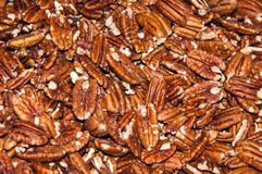 Pecan nut or Carya illinoinensis Stock Photography