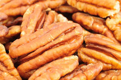 Pecan nut. Royalty Free Stock Photography