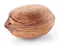 Pecan nut. Stock Photo