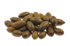 Pecan nuts Stock Image