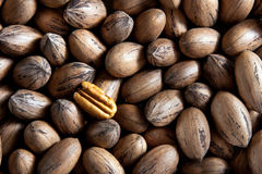 Pecan nuts. In and out of shells royalty free stock photos