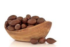 Pecan Nuts Stock Image