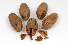Pecan Nuts Royalty Free Stock Photography