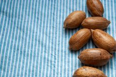 Pecan nuts on blue and white striped kitchen cloth background royalty free stock images